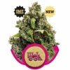 candy-kush-express-version-rapida 1516119849