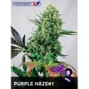 positronics-purple-haze-1-3f 1 1989138120